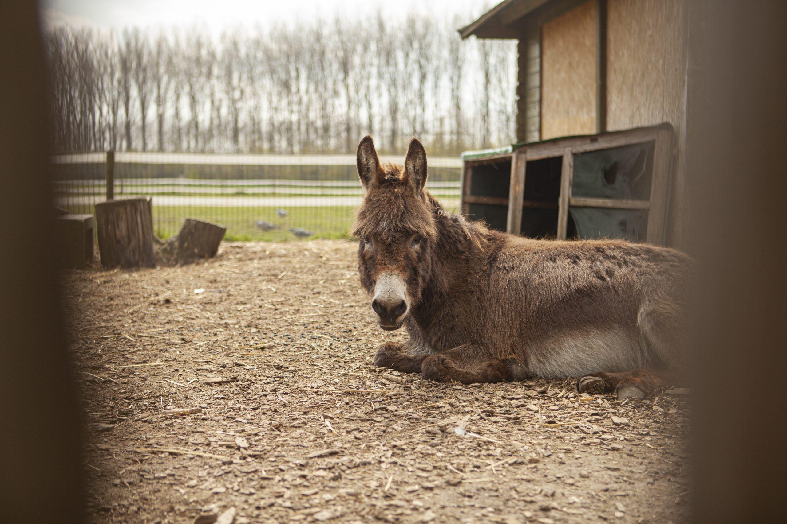 Hof-van-Axel-Zorg-Met-Aandacht-Dieren-Groen-Buiten-zorgboerderij-diervriendelijk-rust-natuurlijk-ruimte