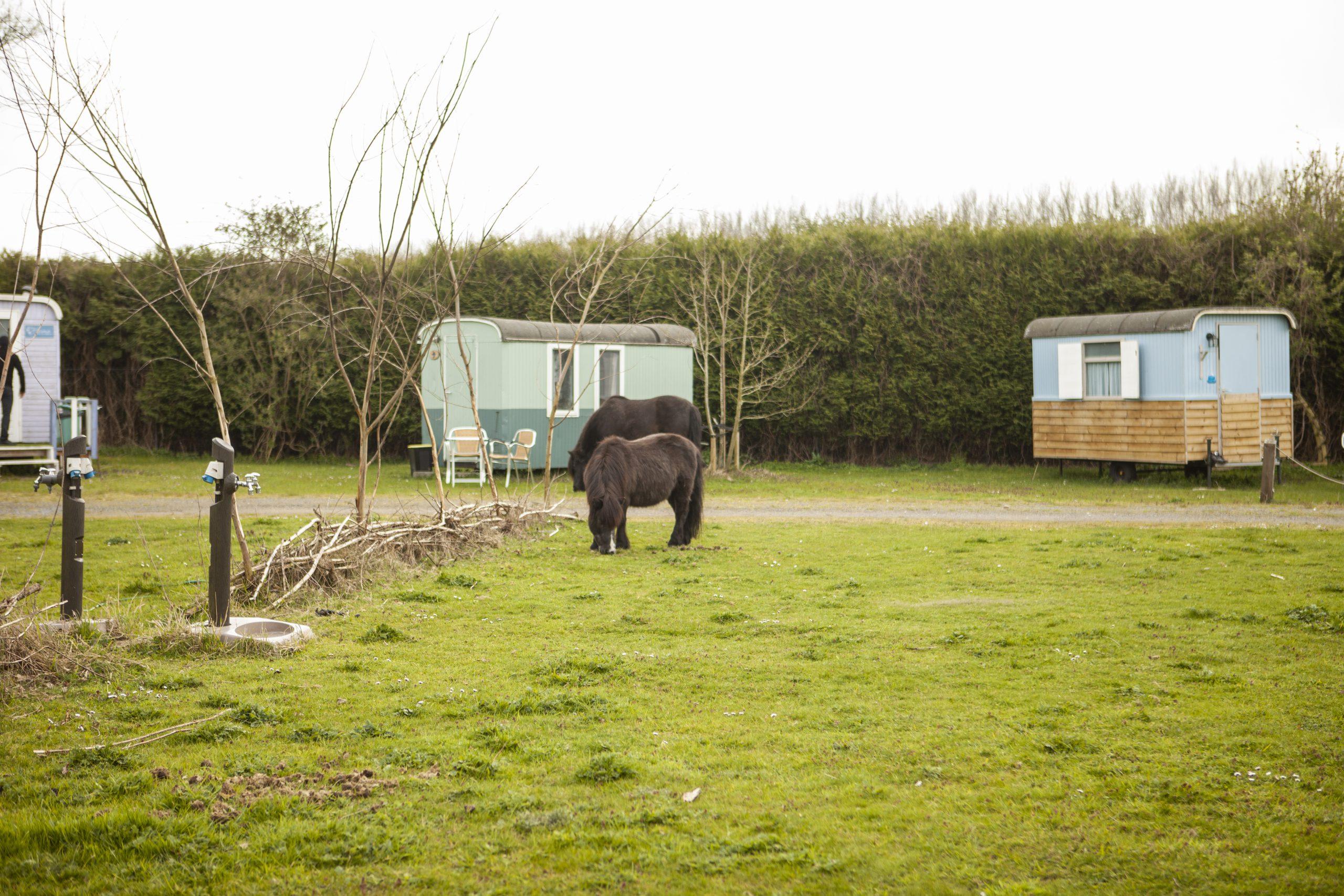Camping-miniboerderijcamping-minicamping-pipowagens-huren-airbnb-hof-van-axel
