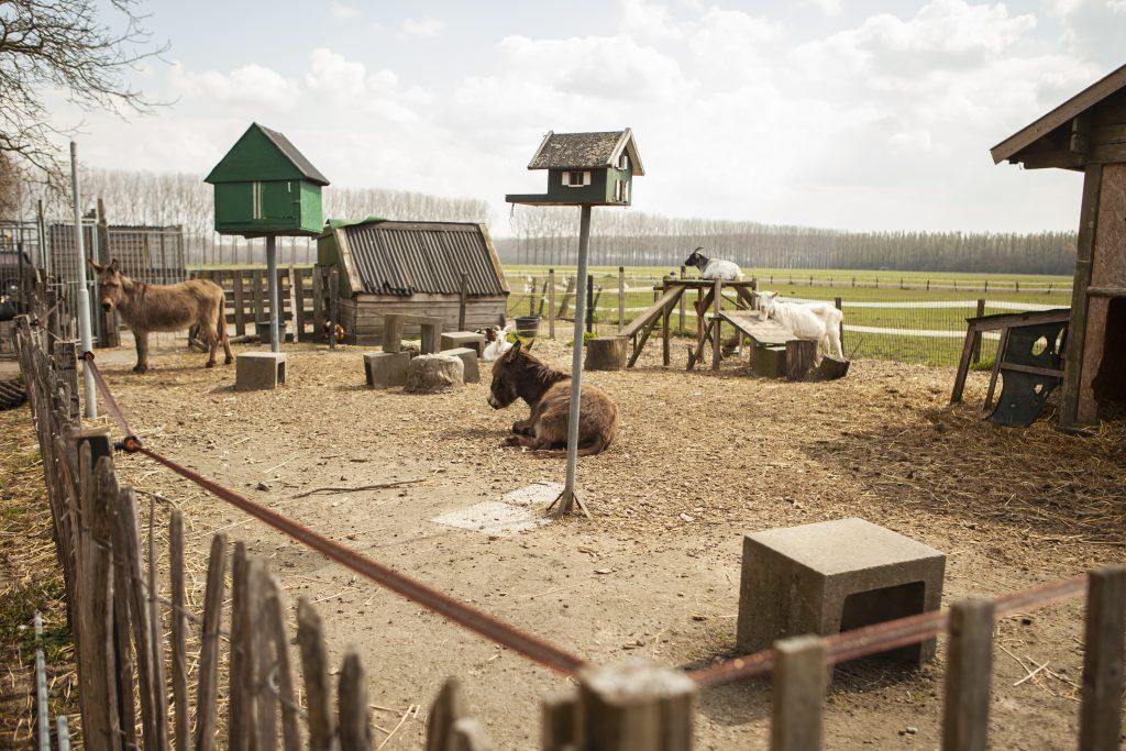 Dieren-hof-van-axel-dagbesteding-Zeeuws-Vlaanderen-Activiteiten-buiten