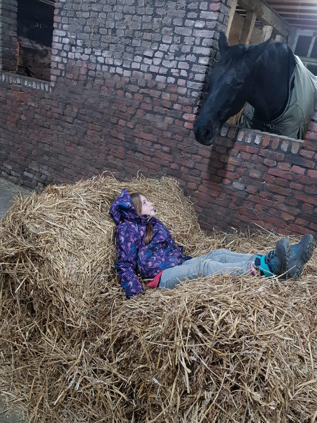 Paarden-contact-hulp-zorgboerderij-gasten-kinderen-hulp-verzorging-camping-paardenstal-zorgboerderij-Hof-van-Axel