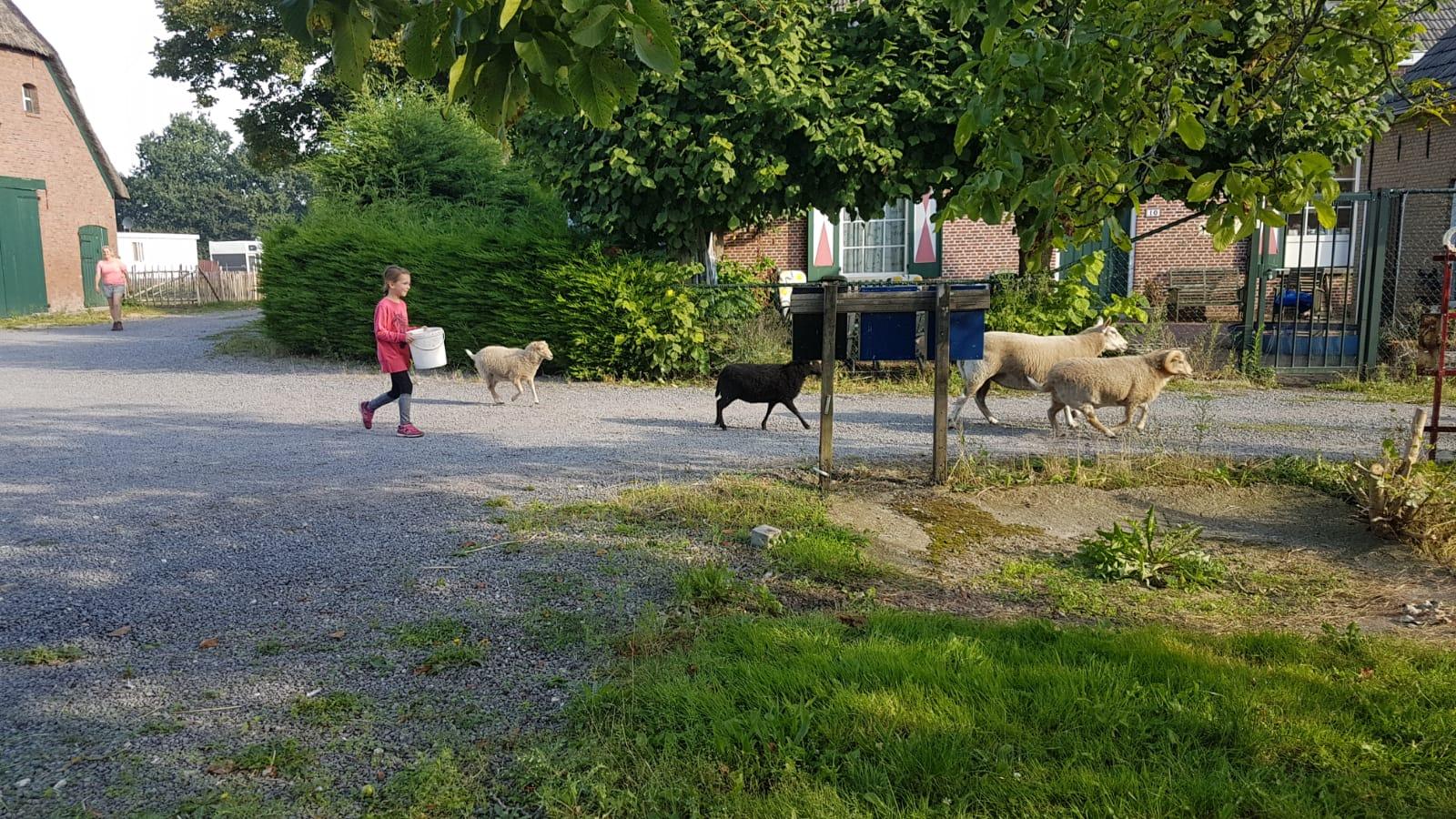 Zorgboerderij-dieren-boerderij-camping-minicamping-hulp-dagbesteding-Hof-van-Axel